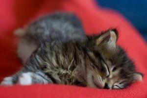 Aranyosi Ervin: Aludj szépen