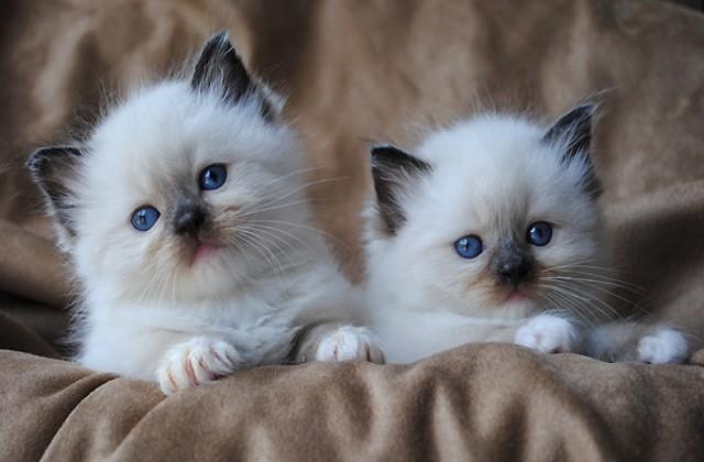 mese a cicáknak