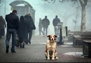 Gazdátlan kutya