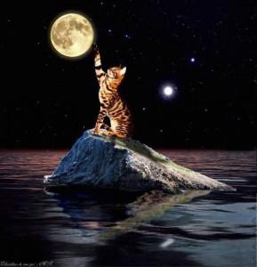 cica és a hold