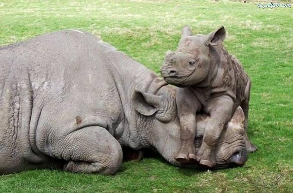 Aranyosi Ervin: A Mami csodálatos