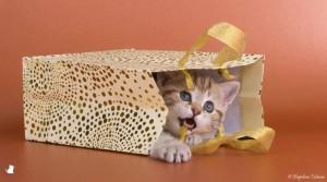 Aranyosi Ervin: Meglepetés cica