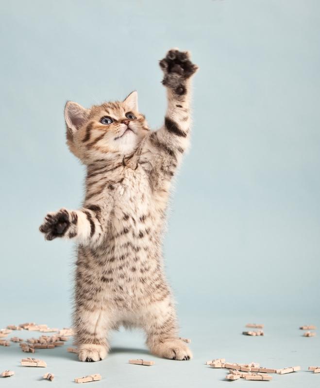 Tapétás cica