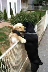 a barátság összeköt
