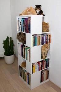 macska könyvek