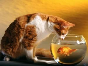 Aranyosi Ervin: Cicahorgászat az akváriumból