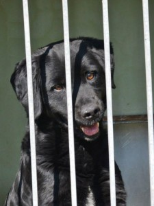 Aranyosi Ervin: Egy rab kutya dala
