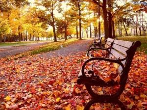 Aranyosi Ervin: Őszi fák
