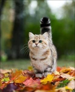 Aranyosi Ervin: Őszi levelek