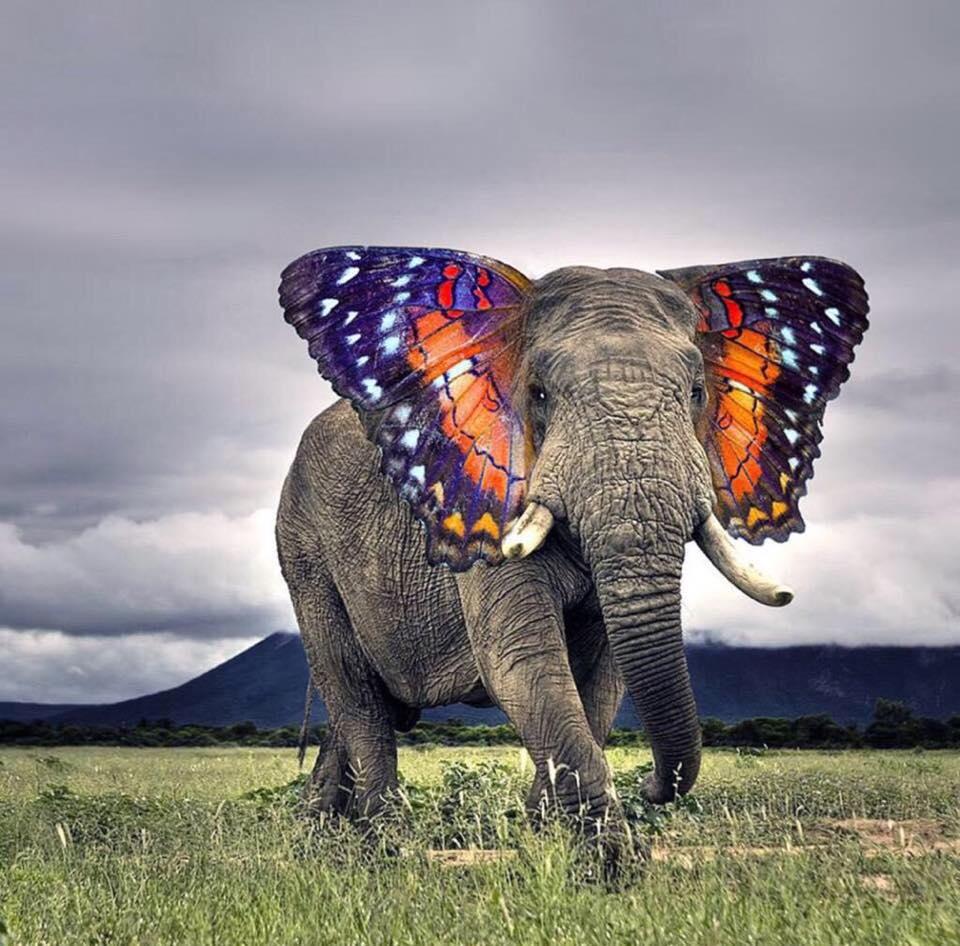 Elefánt, az elefánt