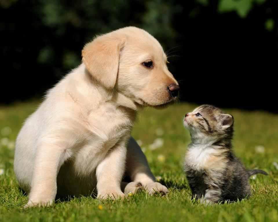 a barátság szeretet-nyelve