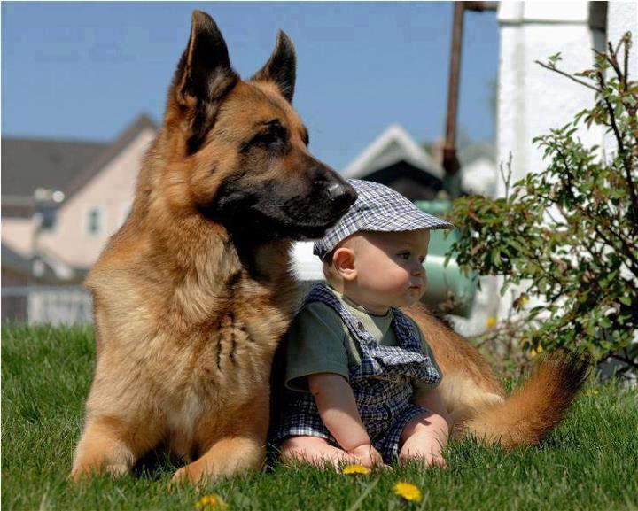 baba örzö kutya