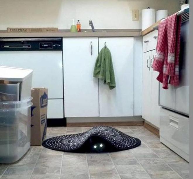 macskarája