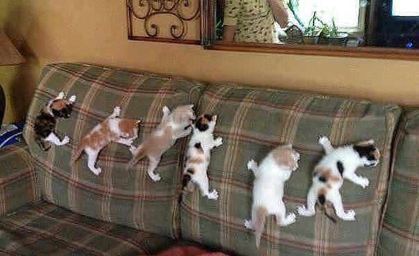 tépőzáras cicák