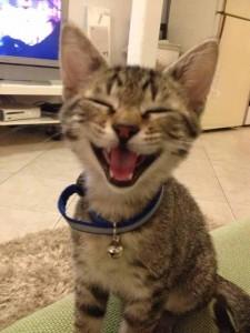 Nevetésre ingerelve