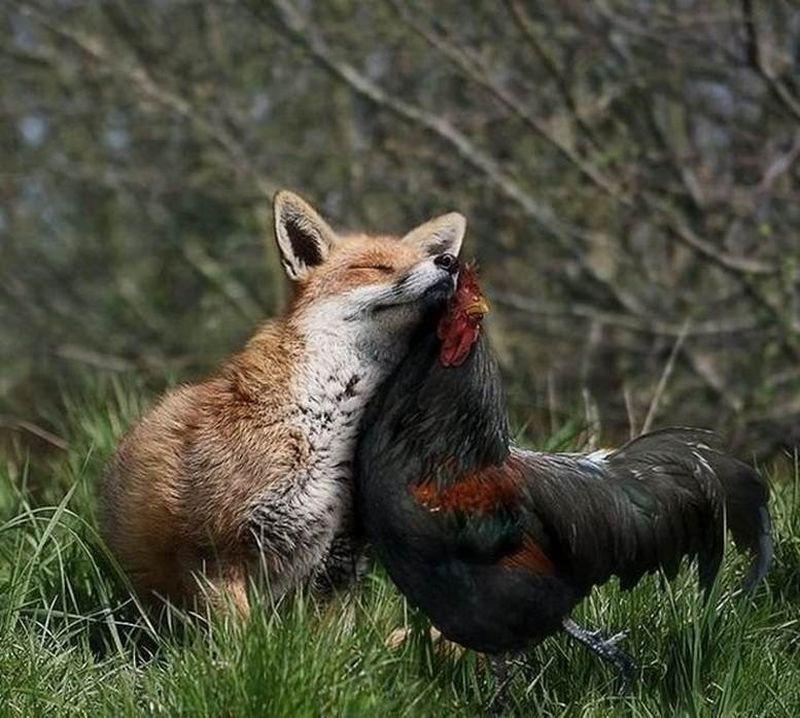igazi szerelem