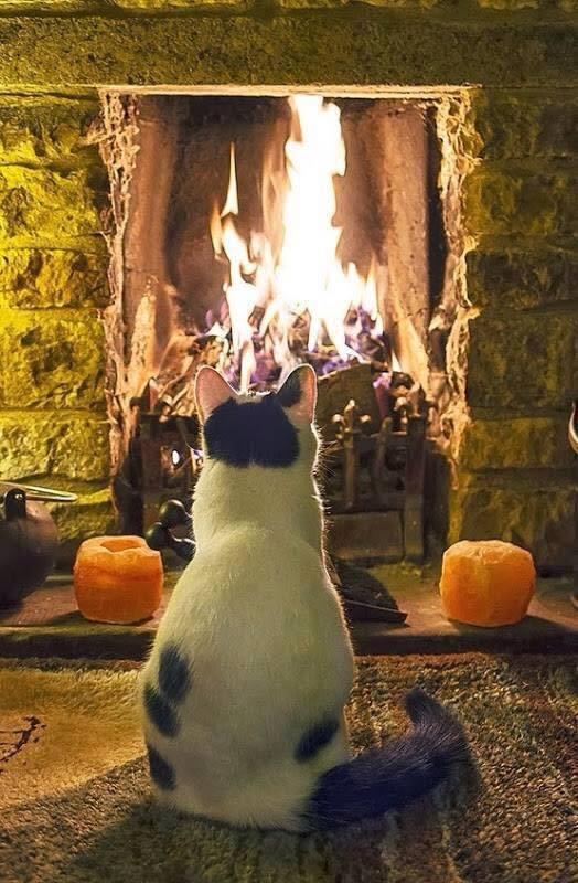 ülök a tűz előtt