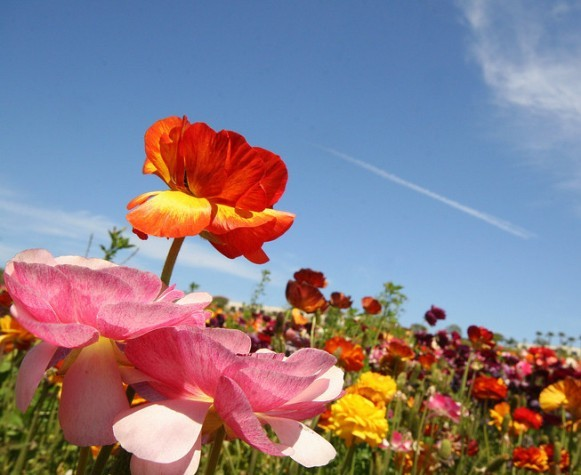Aranyosi Ervin - Ha szeretsz egy virágot