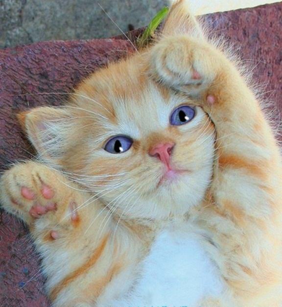 Aranyosi Ervin-Macskamonológ