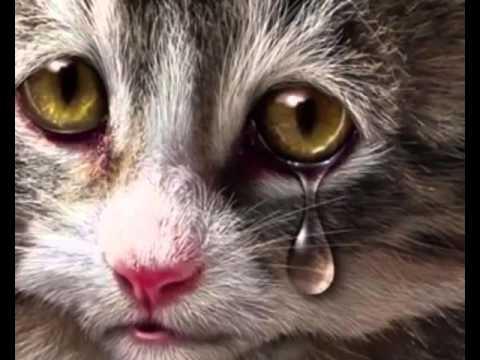 ne sírjatok értem
