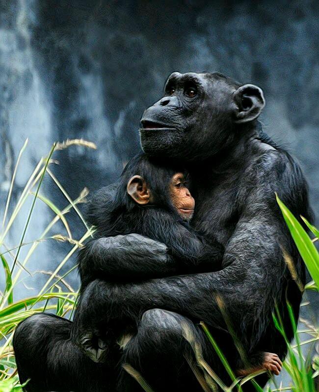 majom | Aranyosi Ervin...