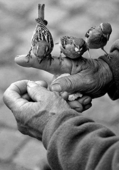 A jóság vonzása