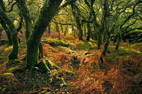 Óvd csak védd az erdőt jpg