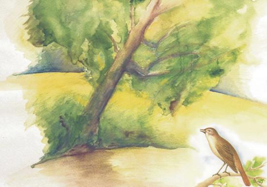 Kakasy Éva: A madarak és fák napja