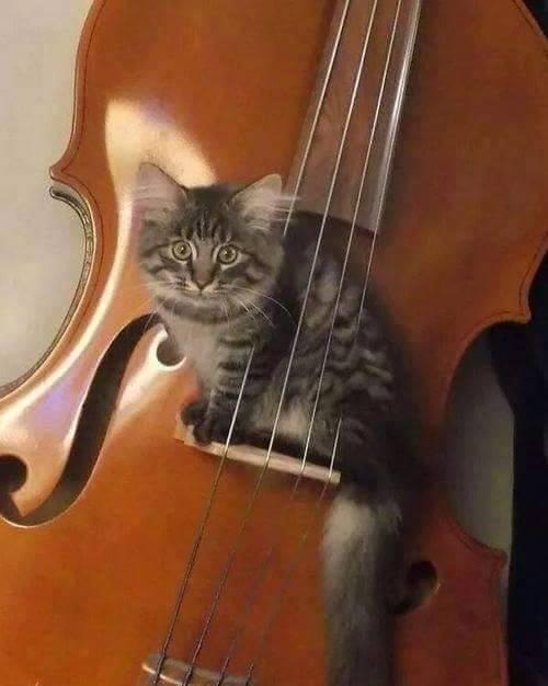 A legjobb muzsikus