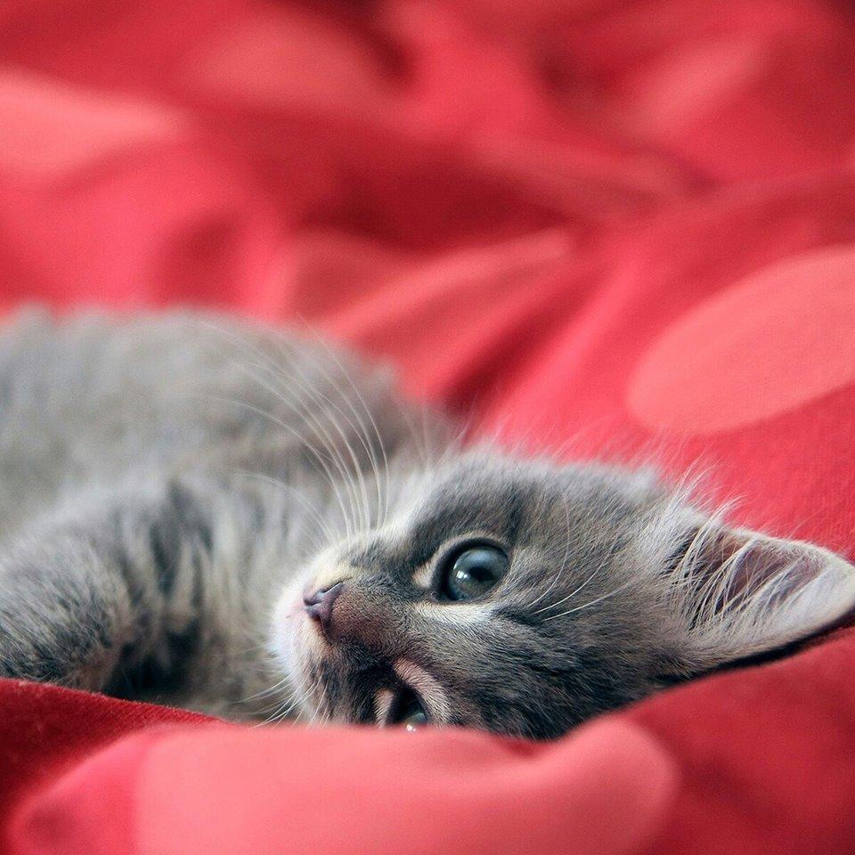 Egy cica vallomása