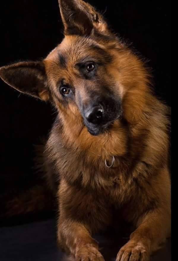 A kutyád