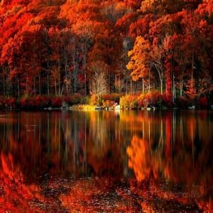 ősz vére csorog