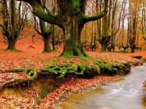 A fák és a honszeretet