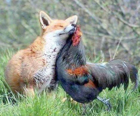 Furcsa barátság