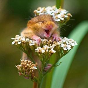 teremtő mosoly