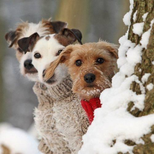 Barát-e a hóember