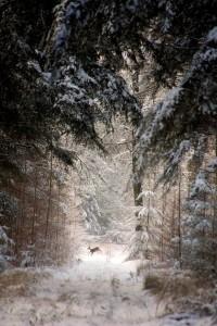 Tél az úr