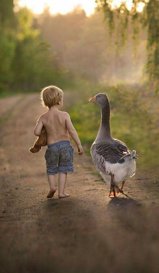 a fiú és a liba