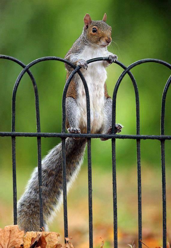 Aranyosi Ervin: Egy mókus gondolatai