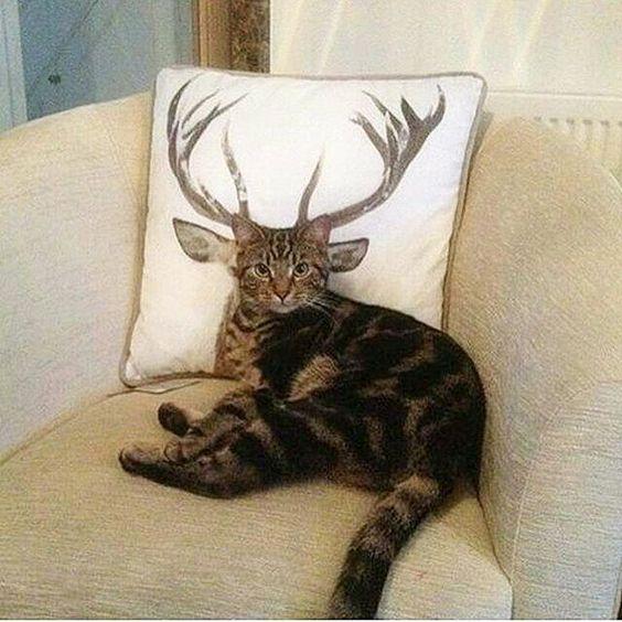 Aranyosi Ervin: Szarvas-cica