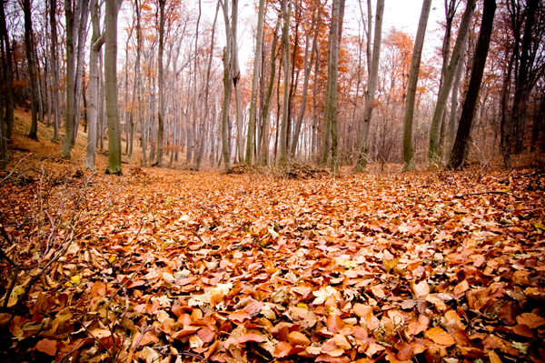 Aranyosi Ervin: November