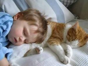 Aranyosi Ervin: A cicák csibészek