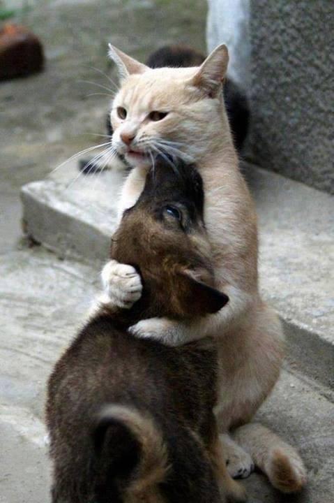 A barátság a legszebb