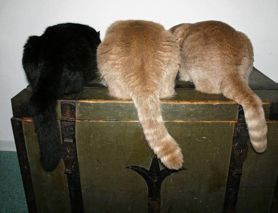 kutya-macska csalárdság