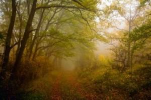 hervadó őszben