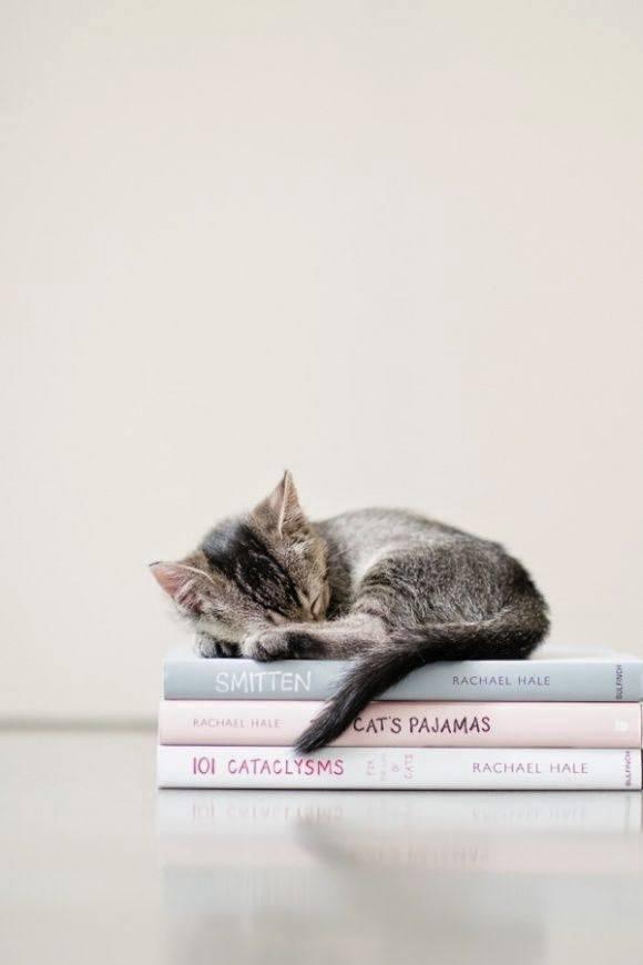 mindent tudó cica