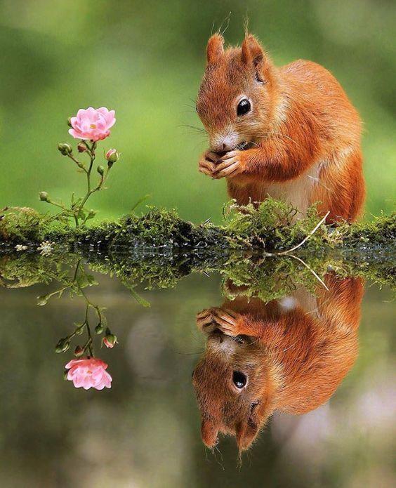 Tengelyes tükrözés